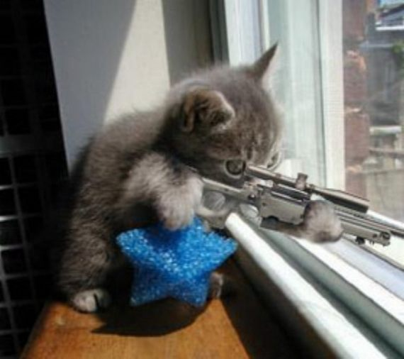 Funny Cat Kitten with Gun