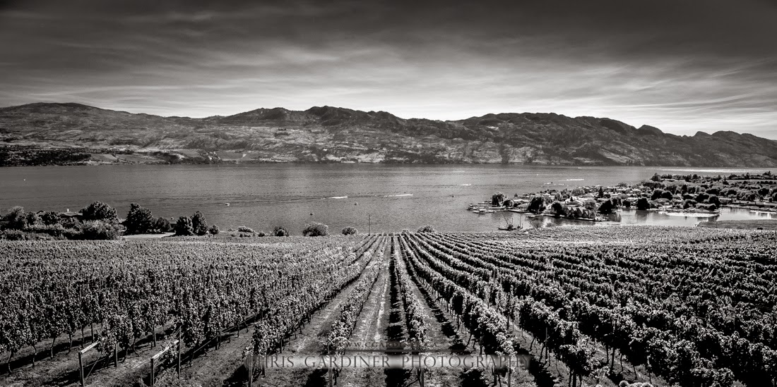 Monochrome photo of Quails Gate Winery in the sunny Okanagan captured by Chris Gardiner Photography