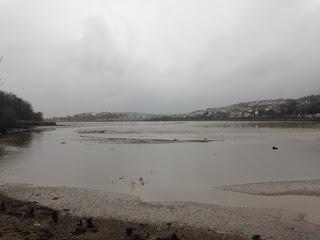 Saltram estuary