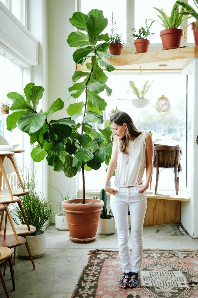 La fabrique d co plantes g antes dans la maison une for Plante dans salle de bain