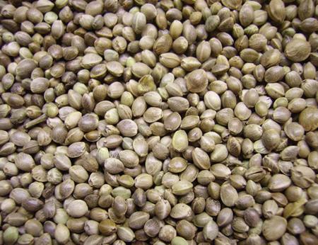 Biji Ganja (Hemp Seed) Sumber Asam Lemak Esensial ~ INDOGANJA