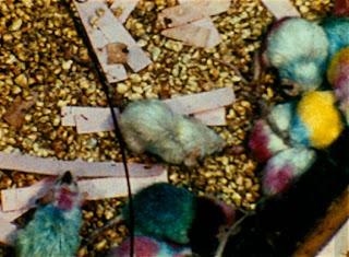 Цветом отмечены разные соц группы мышей и поколения