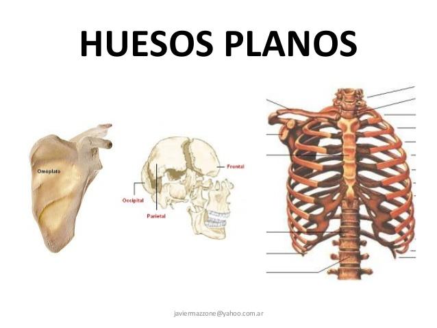 Anatomía Ramón: octubre 2015