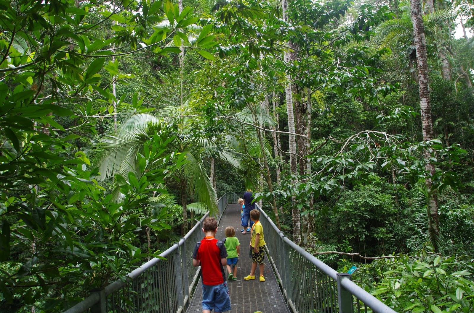 hart family world tour of australia daintree rainforest