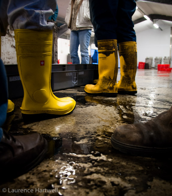Through the gaps newlyn fishing news the fleet is all for Commercial fishing boots