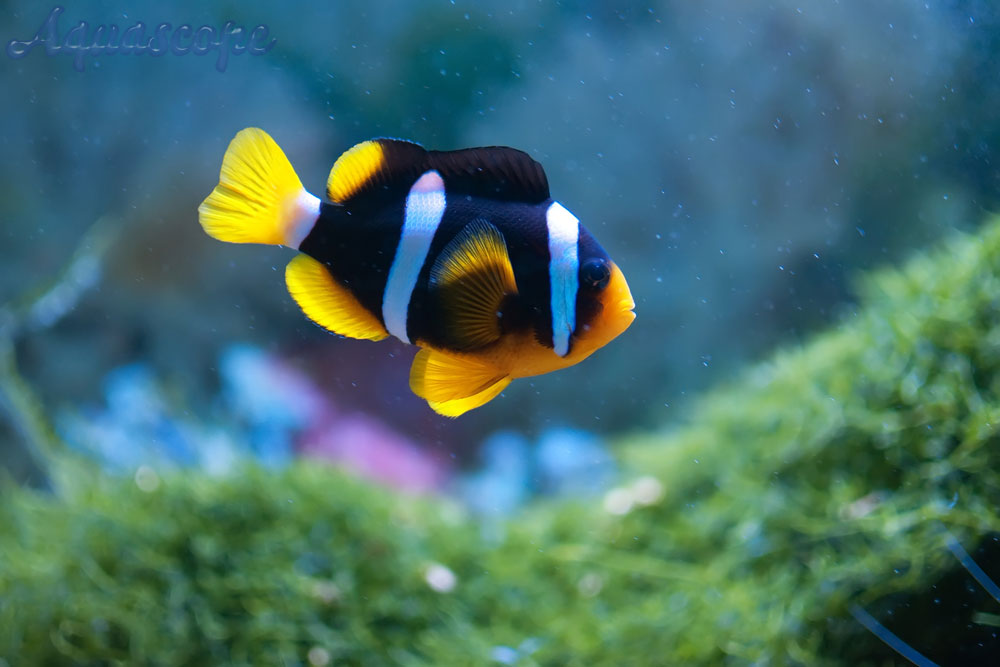 Joe 39 s aquaworld for exotic fishes mumbai india 9833898901 for Beautiful tropical fish