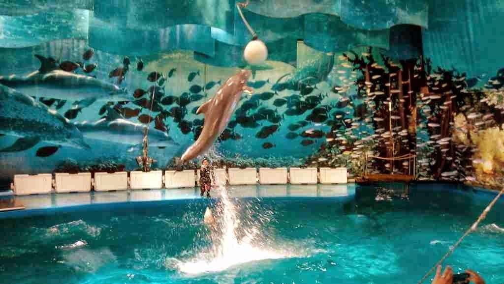 Espectáculo Delfines Zoo Barcelona