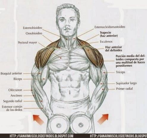 como ganhar massa corporal