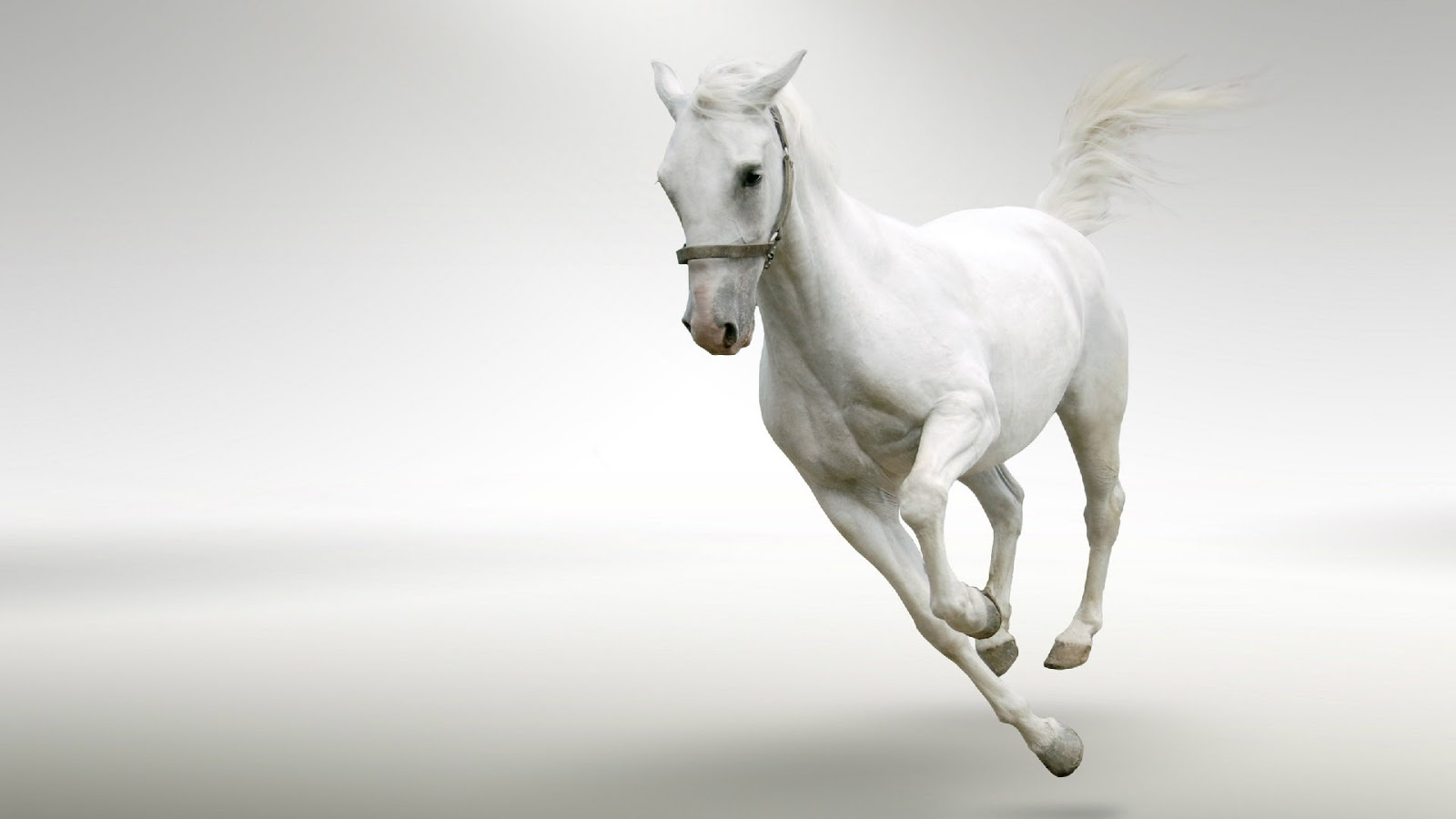 White running horses - photo#8