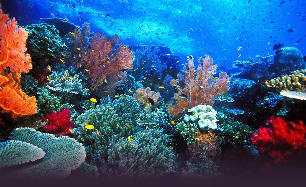 Bawah Laut Wisata Kepulauan Raja Ampat