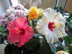 Мой блог о цветах
