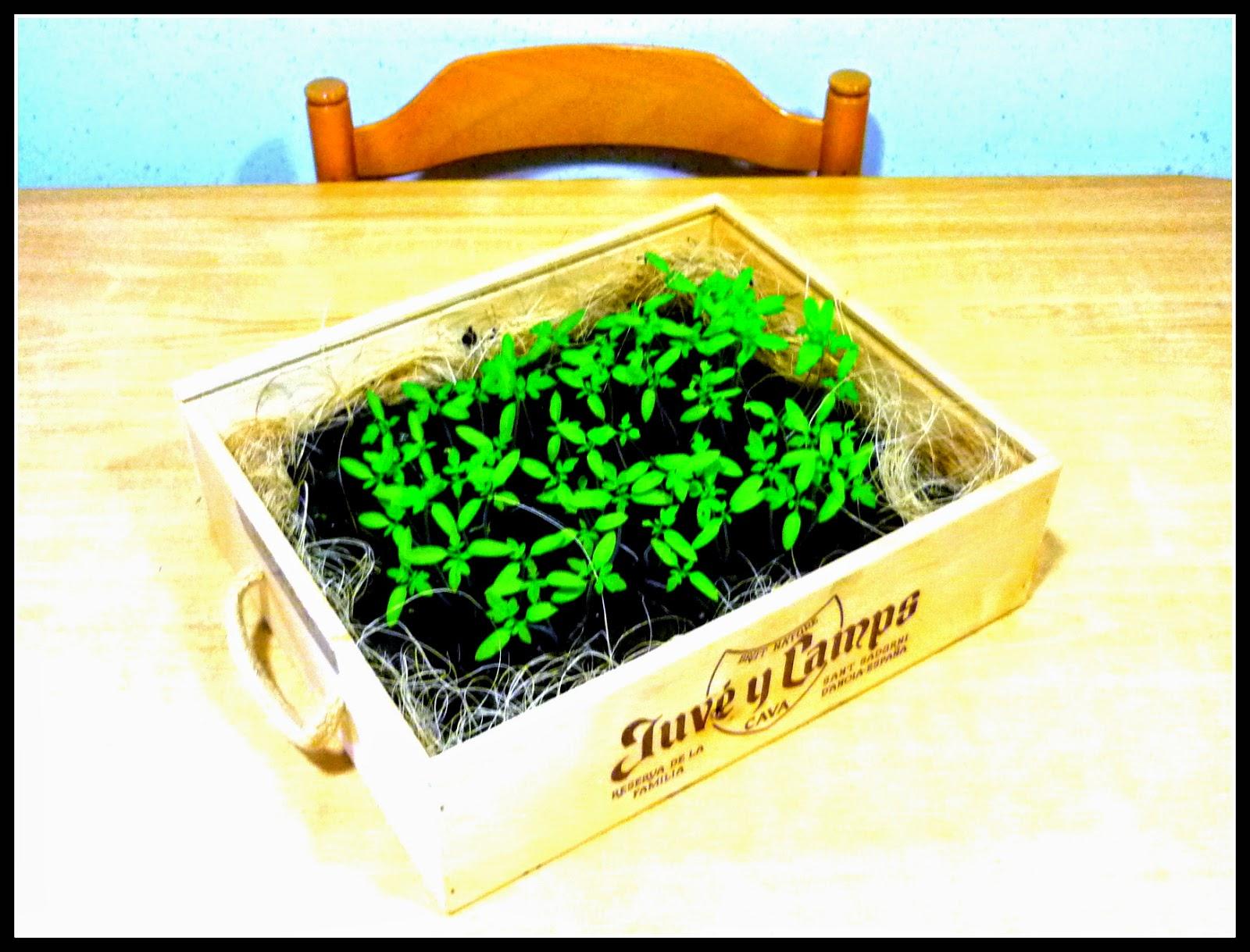 semillero ecologico terminado