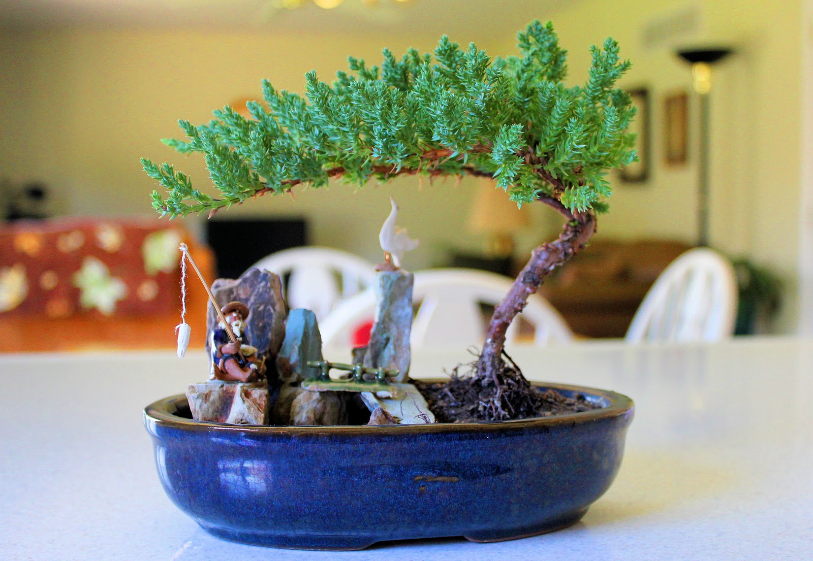Paralyzed With JOY My Little Bonsai