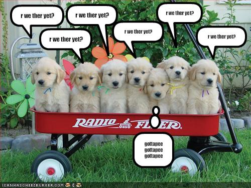 funny cute dogs and puppies funny cute dogs and puppies