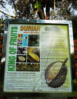 Durian is known as king of fruit among durian lovers