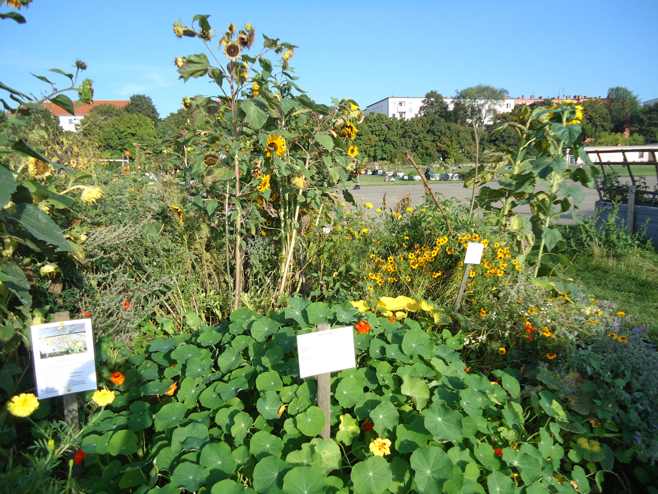Lyptis Blog Dye Gardens And Witch Kitchens