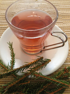 Pine Needle Tea from the 1600s as used by Huron Indians