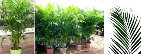 Fitorremediaci n del aire interior las plantas - Plantas de interior purificadoras del aire del hogar ...