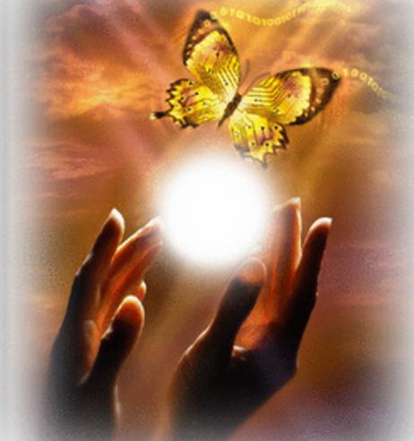 Αποτέλεσμα εικόνας για Πεταλούδα