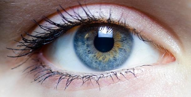 Veja como os olhos evoluíram em 500 milhões de anos
