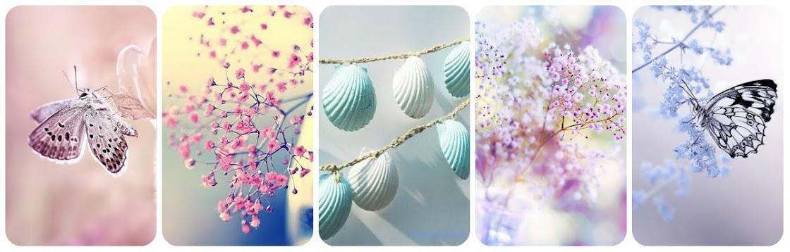 Nadya Safina's blog