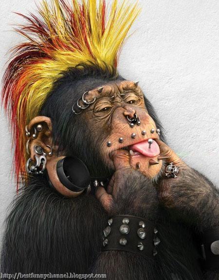 monkey punk