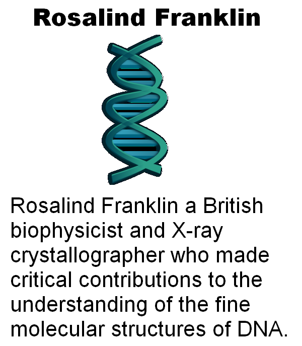 a biography and life work of rosalind franklin a british biophysicist A british biophysicist, rosalind franklin is best known for her contributions to the discovery of the molecular a biography and life work of rosalind franklin.
