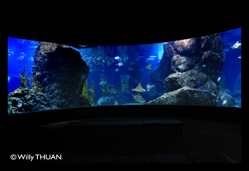 Bangkok Aquarium : One of the newest and silliest attraction is the fish spa set in front ...