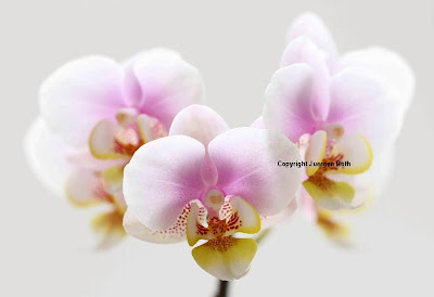 http://juergen-roth.artistwebsites.com/art/all/orchids/all