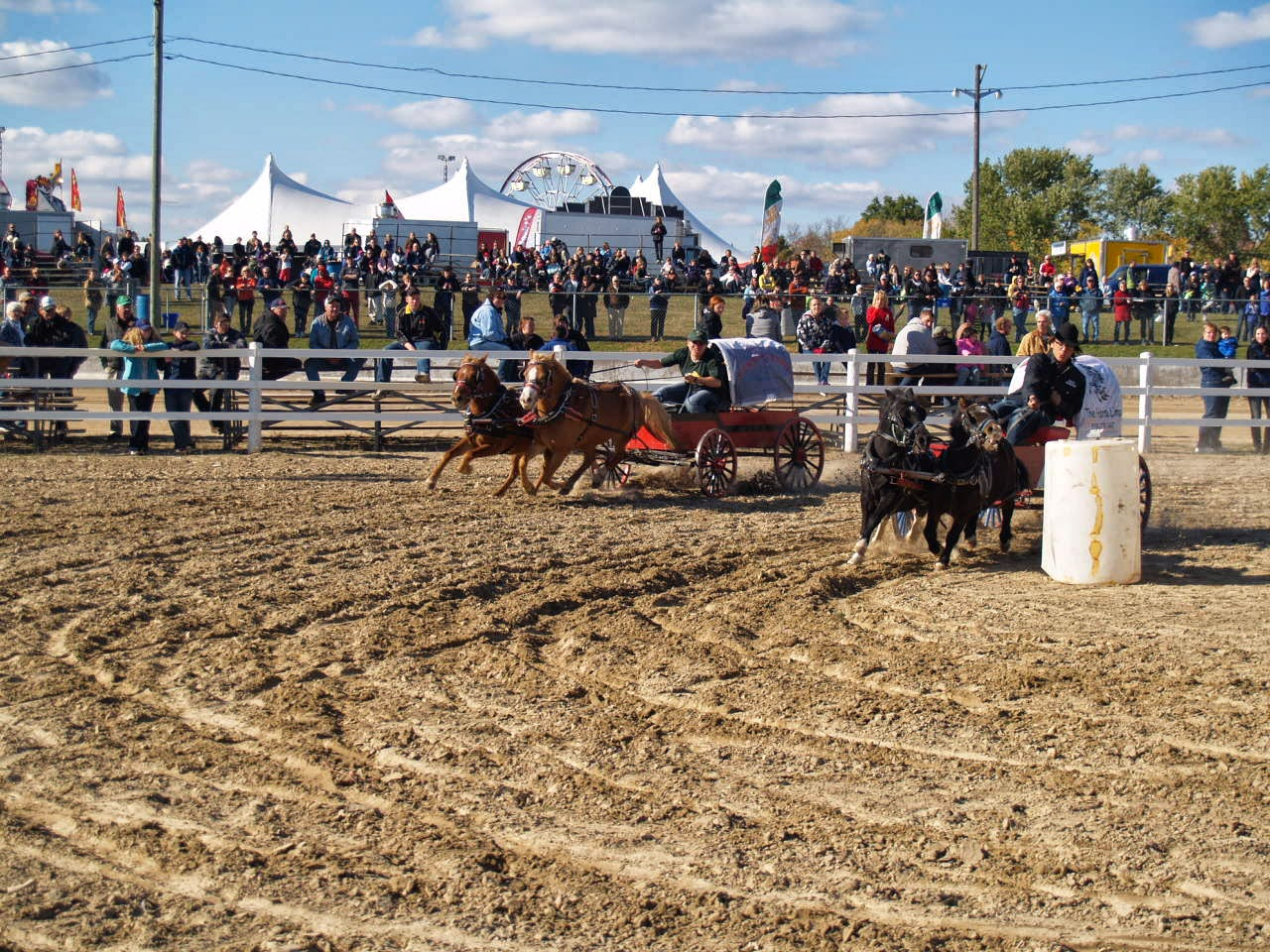Chuck Wagon Championships, Chuckwagon Race, Cowboys, Horse Race, Miniature Horses, Oklahoma, Race, Sports, World Miniature Championships,