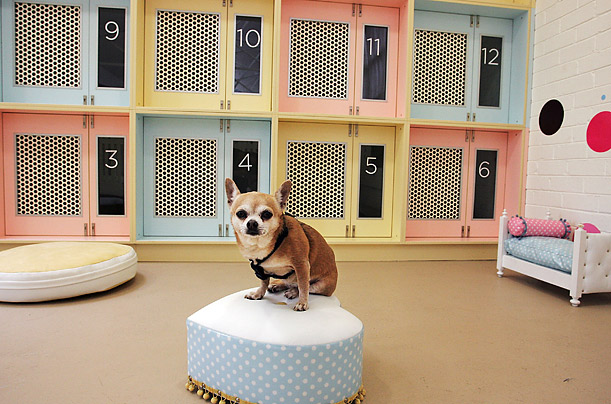 pets my friends pet friendly hotels how to find them dog hotel 611x404