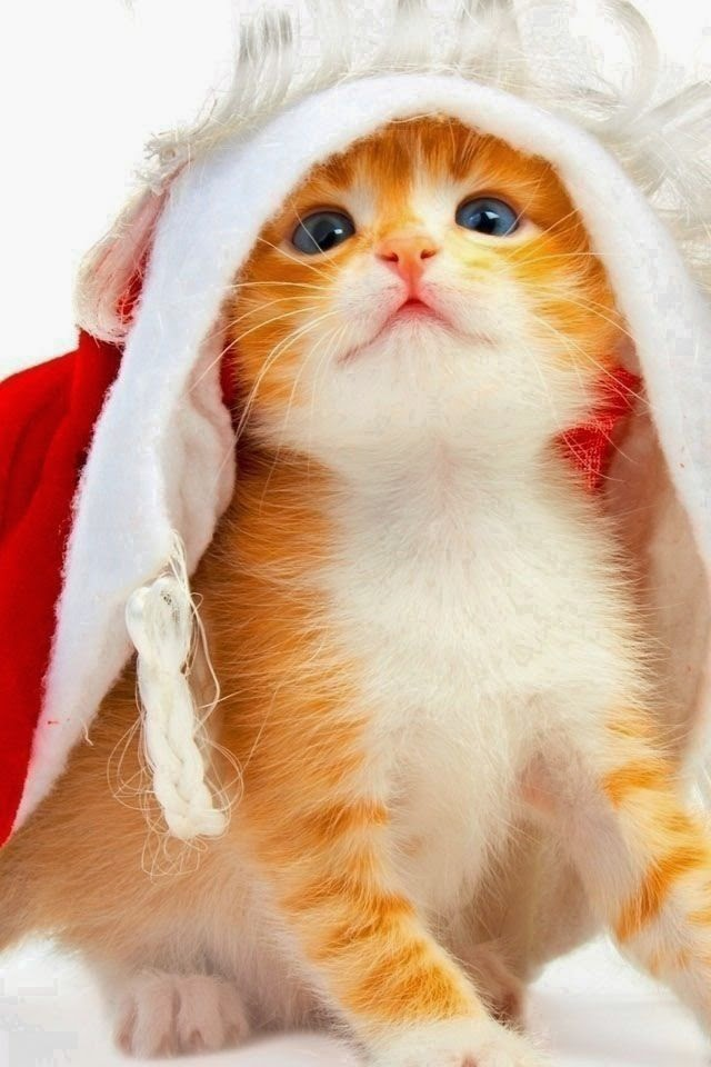 christmas kitten dressed as santa