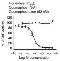 Honeybee concentrations for memory loss.