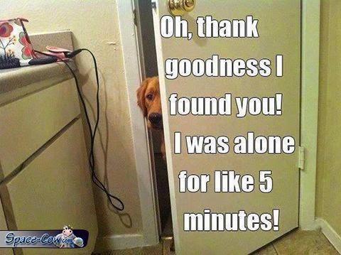 funny dog pets pics