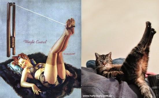 Gatos que parecen chicas Pin-Up