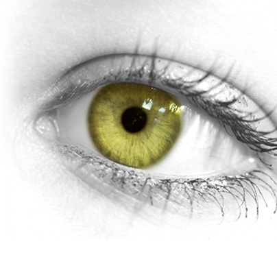 yellow eyes - photo #2
