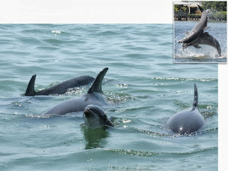 250 dolphins in study showing dolphin names