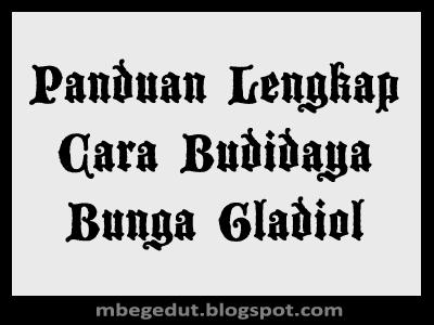 Cara Budidaya Gladiol, Budidaya Bunga Gladiol, Cara Budidaya Bunga Gladiol Yang Baik, Cara Budidaya Bunga Gladiol, Bunga Gladiol