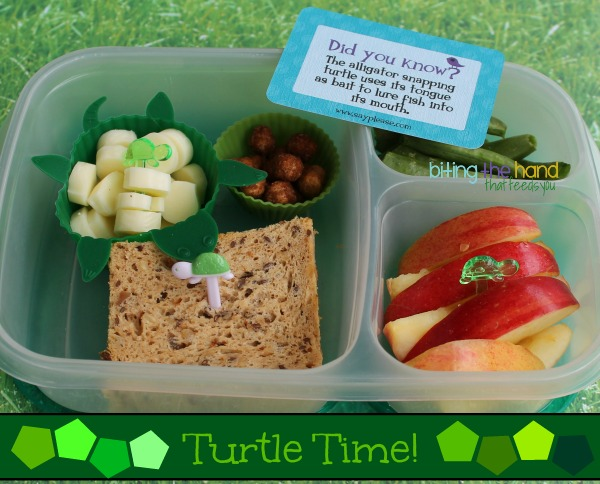 Simple turtle themed bento school lunch