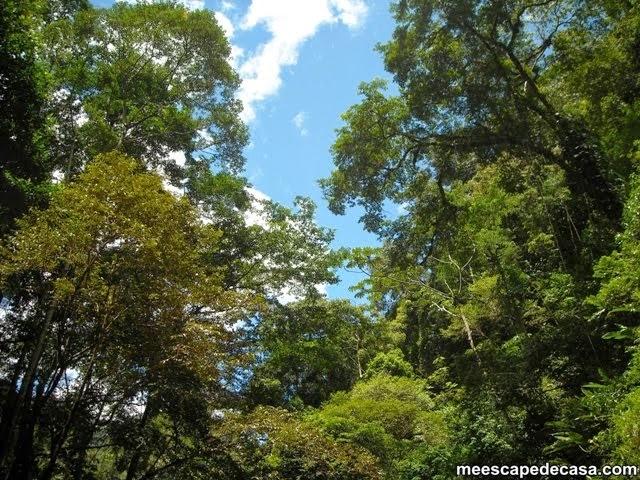 Árboles en los alrededores de la Cascada Tamushal (Cordillera Escalera, Perú)