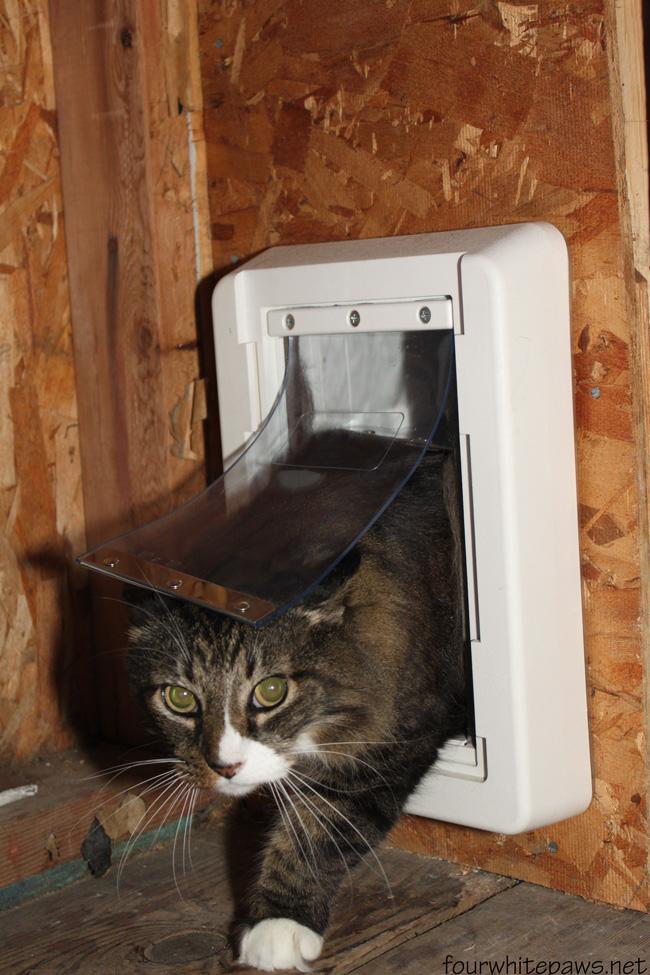 Great Job Cat Pictures