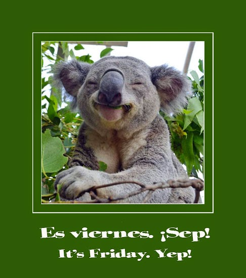 Happy-koala-bear