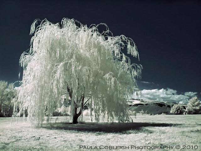 Paula Cobleigh Photography