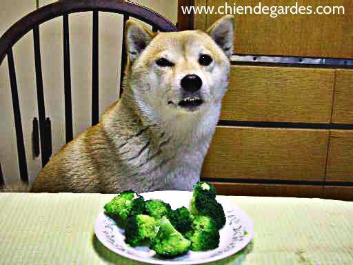 Meilleure nourriture pour votre chien