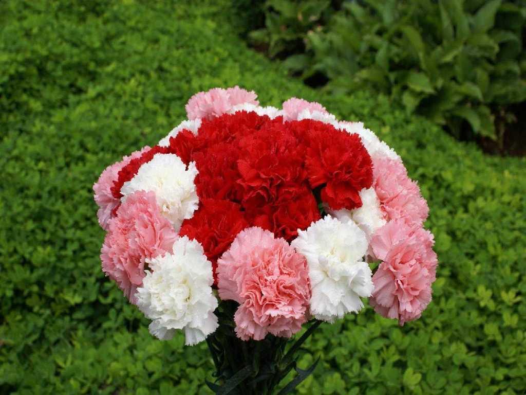 Jardin et fleur jardin et fleurs for Jardin et fleurs