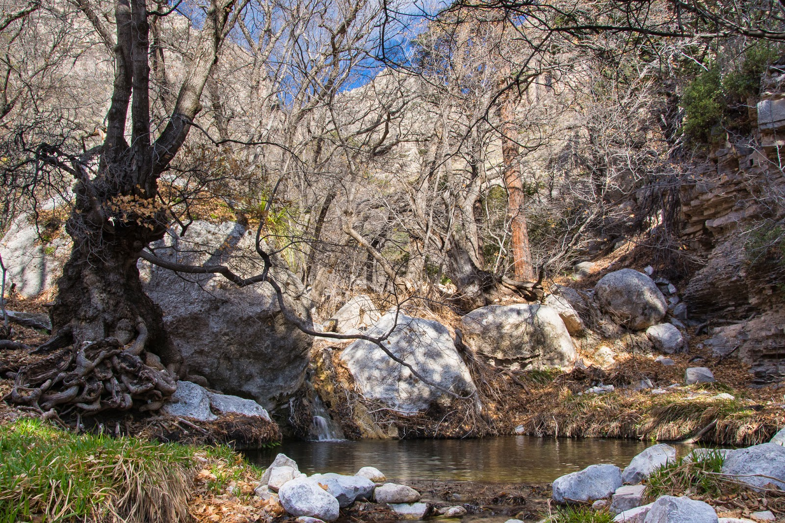 Smith Spring, Guadalupe Mountains National Park