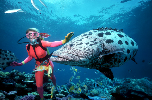 Scuba diving in australia the great barrier reef garut tourism - Best place to dive the great barrier reef ...