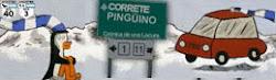 Correte Pinguino
