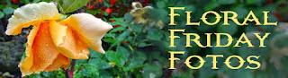 http://floralfridayfoto.blogspot.com/2015/05/fff184-salvia.html?showComment=1433411039509#c2353018802082541749