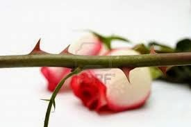 LOVE thorns...
